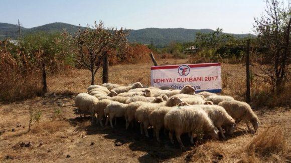 Udhiya/Qurbani: Chechnya & Dagestan