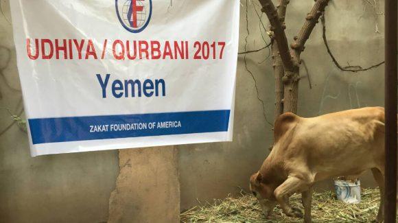 Udhiya/Qurbani in Yemen
