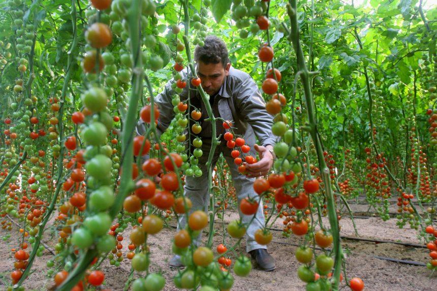 الزكاة و أنيرا تعلنان عن تقديم دفيئات زراعية لقطاع غزة
