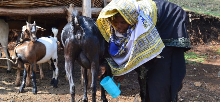 Sustainable Agriculture Can Provide Food Resilience