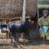الزراعة المستدامة توفر مرونة الغذاء