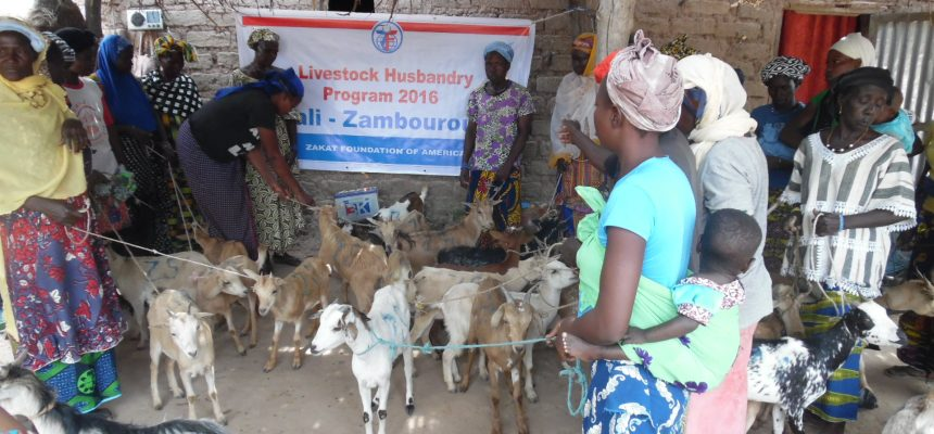 Livestock: The Gift of Life for 1,000 Families