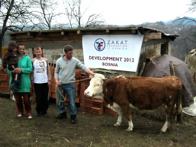 In Bosnia, New Cows Bring Families Relief and Happiness