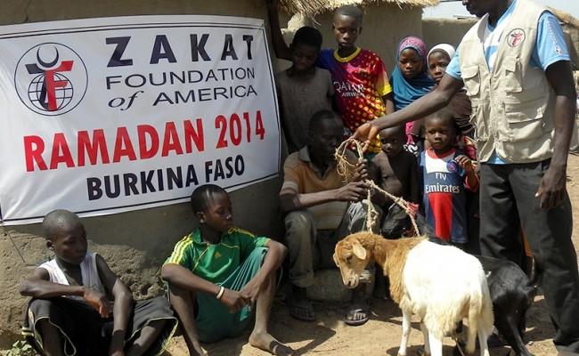 توزيع المواشي في رمضان 2014 – هدايا لمستقبل أكثر اشراقاً