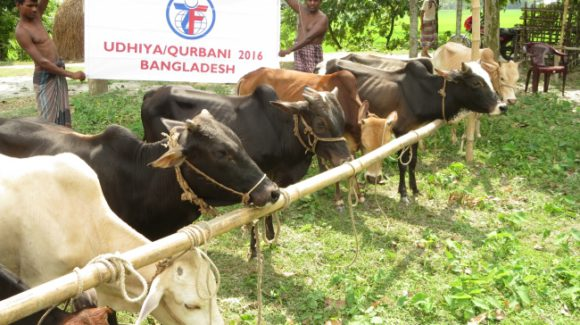 ZF Programs Director Tours the Field in Bangladesh