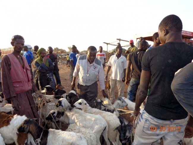Livestock Development Project for Malian Refugees